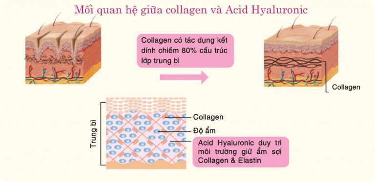 collagen-acid-hyaluronic-768x374